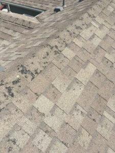 Hail Damaged Roof?